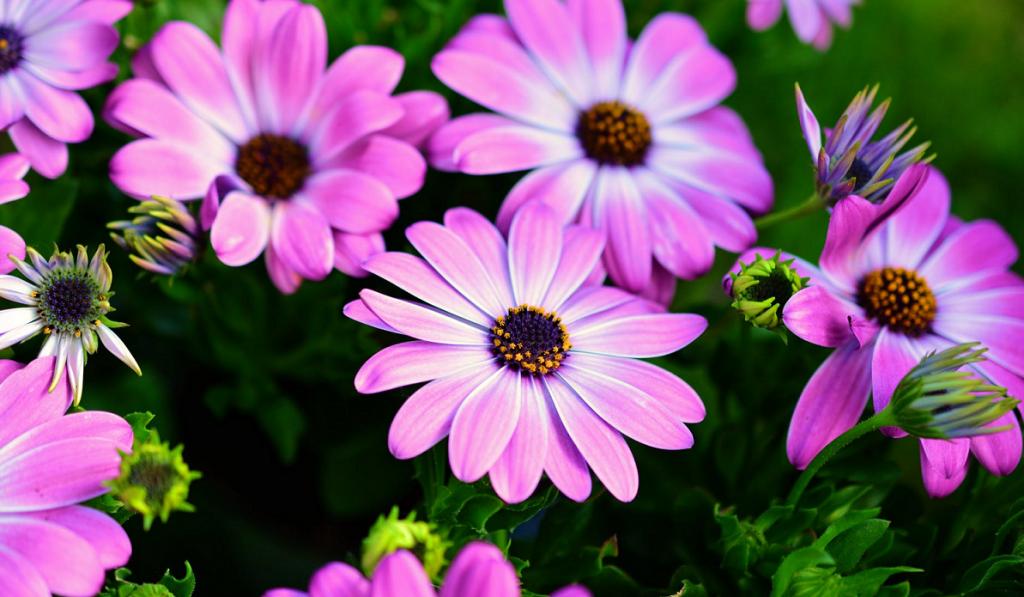 Flower Symbolism _5