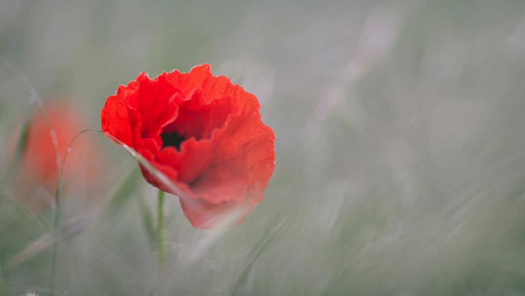 Flower Symbolism _2