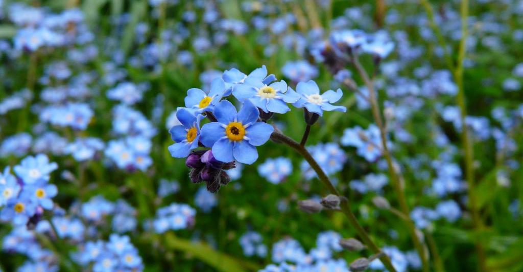 Flower Symbolism _1